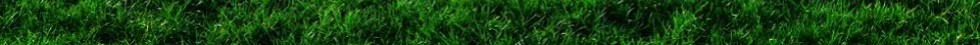 grass_background_footer